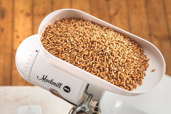 Frisches Getreide im Einfülltrichter der Mockmill.